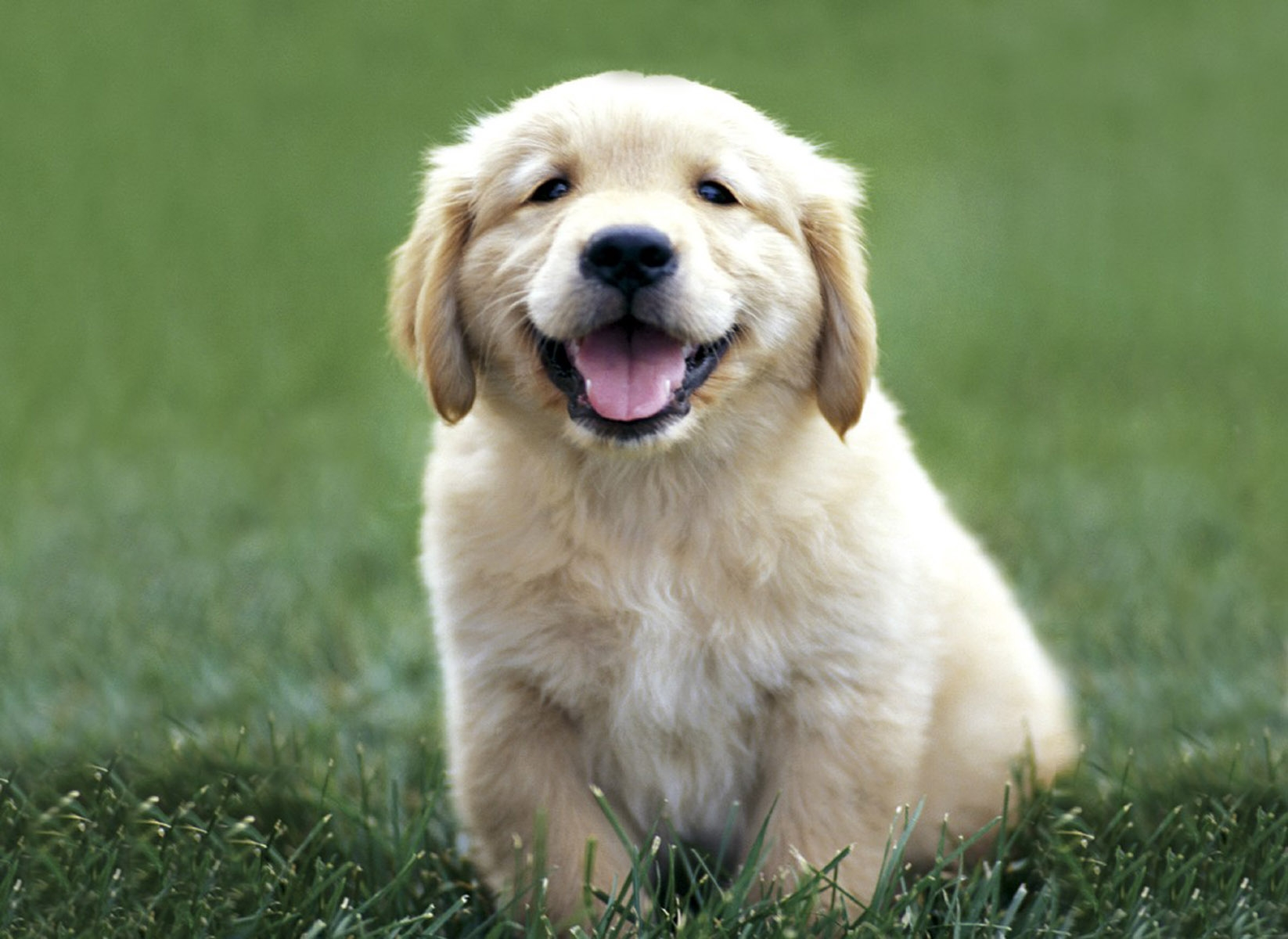Well that was horrible. Here's a picture of a puppy.